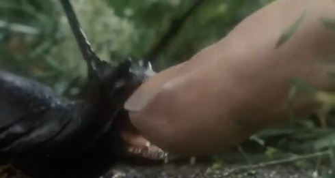 Yep, that's a slug biting a dudes finger. Slugs have jaws now.